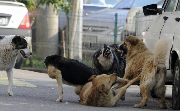 Команда Высокинского отдала Екатеринбург диким животным. Жители ждут новых нападений