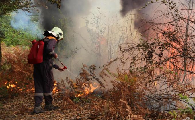 Лесные пожары в УрФО