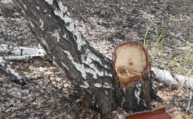 Челябинский лесник раскрыл схемы кражи леса