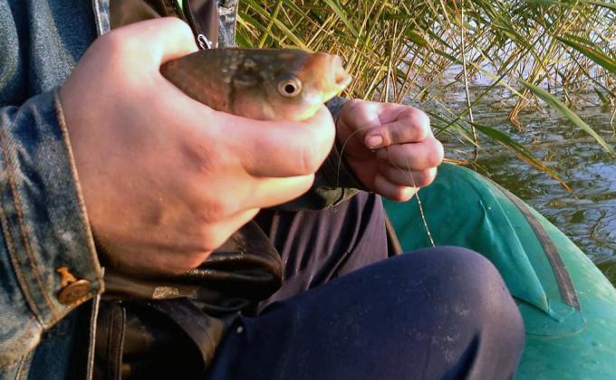 Челябинские рыбхозы сообщили о неисполнении продовольственной программы