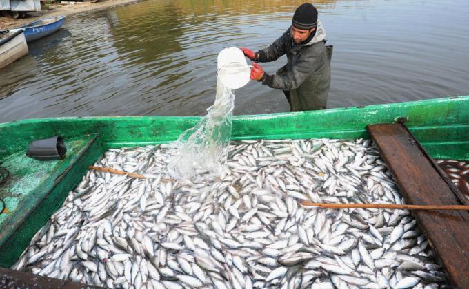 Аграрии Курганской области отказались от очистки и зарыбления озер