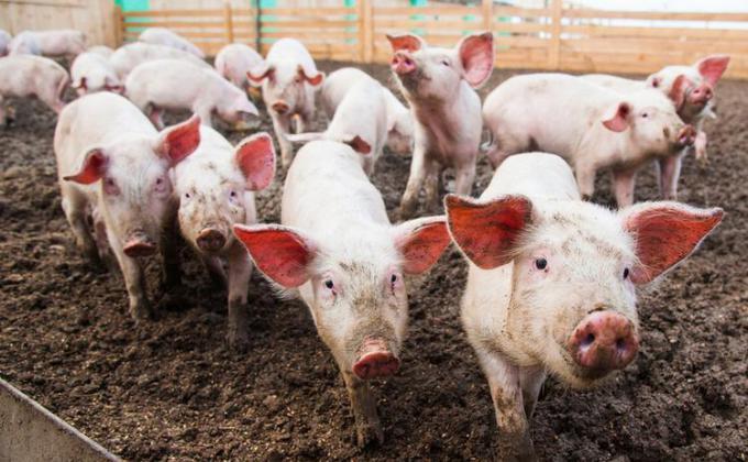 Деппромышленности зарезал субсидии фермерам ХМАО