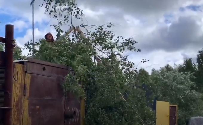 Коммерсанты Пыть-Яха уничтожают леса