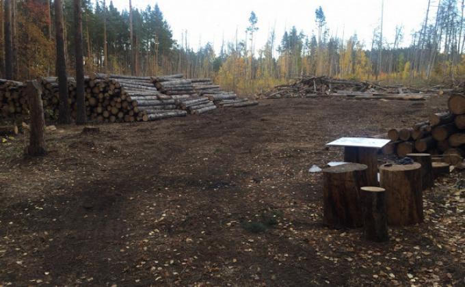 Челябинские леса вырубают ради прибылей монополистов. Участники отрасли требуют отменить законы «времен Климова»