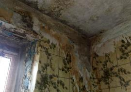 Многоквартирный дом в Новом Уренгое покрылся плесенью после капремонта