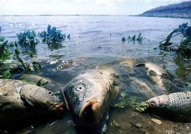 Прокуратура занялась мором рыбы в Исети