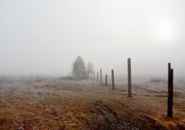 Муниципалитет Тюменской области заменил сельхозугодья нелегальными свалками. В регионе погибают десятки тысяч гектаров пашни