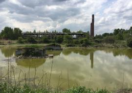 Агрокомплекс «Горноуральский» пойдет под суд за разлив фекалий свиней