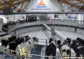 Минсельхоз РФ присвоил особый статус тюменскому молочному предприятию