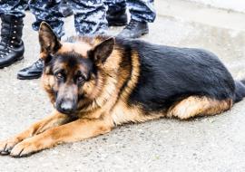 В Югре собаки помогли раскрыть 254 преступления