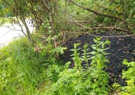 Подрядчиков «Росавтодора» по М5 подозревают в загрязнении челябинского леса