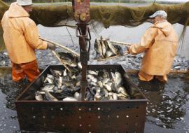 Югорский рыбзавод отсудил у застройщика 176 миллионов