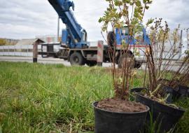 Мэрия Челябинска заплатит 122 миллиона за озеленение центра города