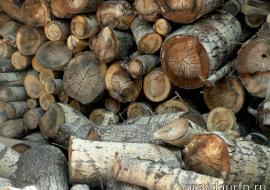 В Челябинской таможне возбудили уголовные дела за взятку и контрабанду леса