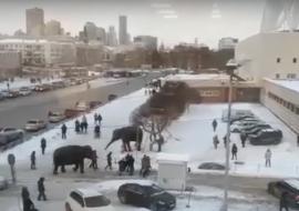 В Екатеринбурге слоны сбежали из цирка