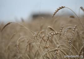 Минсельхоз РФ поручил Челябинской области вырастить 1,8 миллиона тонн зерна