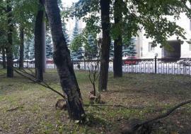 Власти Челябинска проведут проверку гибели сотен деревьев