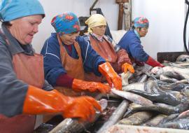 Суд вмешался в работу крупного рыбозавода ЯНАО