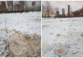 В Екатеринбурге прокуратура начала проверку информации о вырубке деревьев в парке УрГУПС