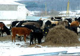 Свердловским аграриям перечислят 7,6 миллиарда субсидий