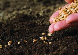 Челябинские аграрии получат 495 миллионов субсидий