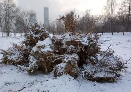 В Екатеринбурге прокуратура обвинила руководство УрГУПС в вырубке деревьев