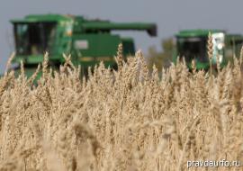 Зауральские аграрии недобрали 200 тысяч тонн урожая