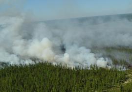 Площадь лесных пожаров в ЯНАО выросла втрое