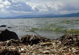 Минприроды усилит проверки тагильских водоемов