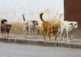 Дума Тюмени повесила собак на Моора