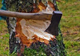 В Челябинской области преступную группу осудили за вырубку деревьев с ущербом в 34 миллиона