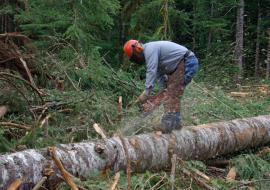 «Юргамышский лесхоз» заплатит 6,7 миллиона за незаконную рубку на территории памятника природы