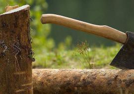 На Южном Урале втрое сократилась незаконная вырубка лесов