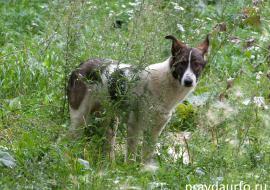 Мэрия Надыма ответила в суде за нападение бродячей собаки на ребенка