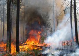 В ЯНАО загорелись леса