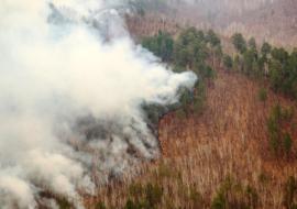 В ЯНАО площадь лесных пожаров увеличилась в 1,5 раза