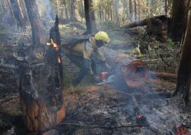 Кобылкин заявил о переломе в тушении лесных пожаров в ЯНАО