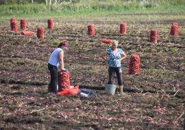 Свердловские аграрии получат 280 миллионов дополнительно