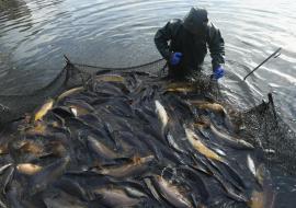 Тюменская область вышла в лидеры по производству водных биоресурсов