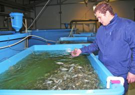 В акваторию Сабетты выпустили молодь рыбы на 922 миллиона