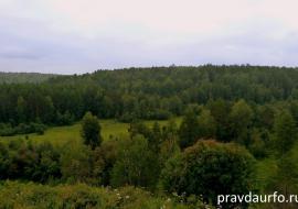 Природнадзор ХМАО не увидел нарушений в вырубках лесфонда под Югорском