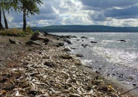 «Водоканал» Нижнего Тагила вновь слил опасные стоки к Черноисточинское водохранилище