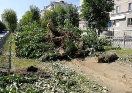 Районная администрация опровергла заявление Высокинского по вырубленной аллее на Химмаше