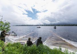 «Газпром нефть» выпустила в реки ЯНАО и ХМАО миллионы мальков пеляди и муксуна