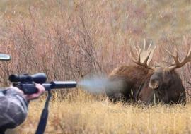 Прокуратура ЯНАО указала МВД на потворство браконьерам