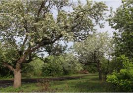 На землях монастыря в Челябинске разобьют парк