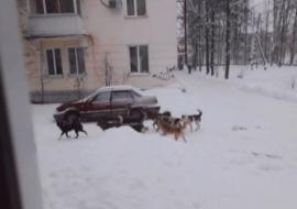 Глава гордумы Челябинска прокомментировал жалобы населения на бездомных собак