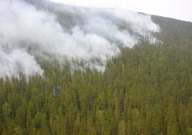 На Ямале лесные пожары охватили около шести тысяч гектаров