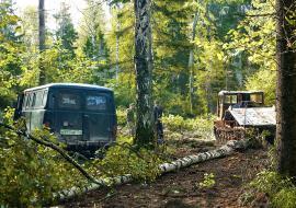 Челябинское управление лесами выдало разрешение на уничтожение леса в районе Аши