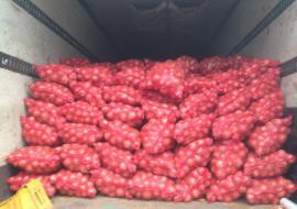 Россельхознадзор вскрыл нелегальный ввоз 84 тонн овощей из Киргизии